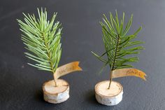 DIY birch branch and mini tree place card by most lovely things, @Kayla Hurst