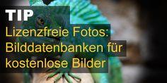 Bilddatenbanken für kostenlose Bilder und lizenzfreie Fotos. Frei zur kommerziellen Nutzung. Kein Bildnachweis, keine Registrierung nötig.