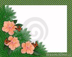 Hibiscus floral e borboletas da beira