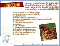 El Ganoderma es un hongo procedente de Asia que en China se usa en la medicina tradicional. Tiene grandes beneficios como antitumoral, inmunoprotector, protege a tu hígado, baja colesterol y triglicéridos, entre muchos otros beneficios. Asia, Vegetables, Food, Medicine, Clean Diet, Fungi, Natural Remedies, Traditional, Diets