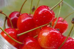 Cherries! ~ Mary Wald's Place -   Cherries Cherry Tree, Cherries, Beautiful Roses, Mary, Fruit, Holiday, Food, Maraschino Cherries, Vacations