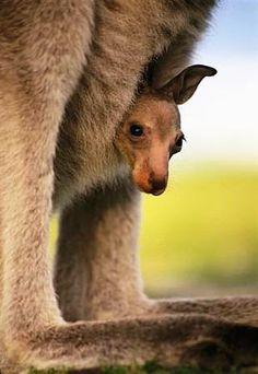 Mini Kangur w torbie