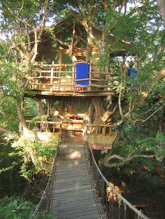 I will make a tree house so my kids can climb a tree, walk across a wooden bridge, and adventure to imagination in their club house