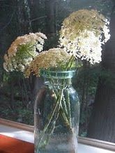 Queen Ann's Lace.  I love adding this to flower arrangements or it is beautiful by itself.