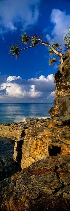 Beautiful Noosa National Park, Australia