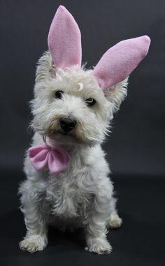 Happy Easter Westie