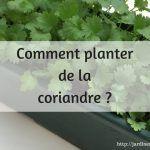 Comment planter la coriandre ?