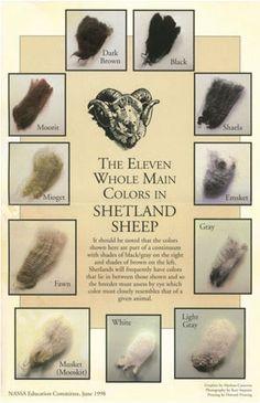 Shetland Fleece Colors Chart