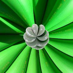 #013-Grüne Kabelblume