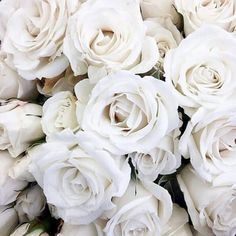 Find images and videos about white, flowers and rose on We Heart It - the app to get lost in what you love.