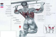 exercicios para grupos musculares - Pesquisa Google