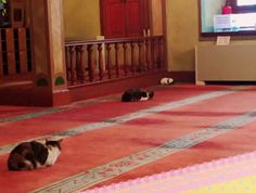 Istanbul, gatti randagi trovano riparo dal freddo nella moschea: guarda