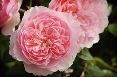 Flores para la boda similares a las peonias