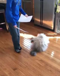 Funny Animal Videos, Funny Animal Pictures, Cute Funny Animals, Funny Cats, Crazy Cat Lady, Crazy Cats, Animals And Pets, Baby Animals, Buy A Cat