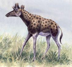 Shansitherium (Artiodactyla: Giraffidae) China Mioceno by WillemSvdMerwe on deviantART