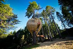Restaurante Yellow Treehouse en Auckland, Nueva Zelanda: diseñado por Pacific Enviorments Architects, está instalado a 10 m de altura, entre las ramas de una secuoya de 1.7 m de diámetro y 40 años de antigüedad.