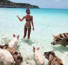 Swimming Pigs in Bahamas ! Pig Island Bahamas, Pig Beach Bahamas, Exuma Island, Bahamas Honeymoon, Bahamas Vacation, Bahamas Cruise, Island Beach, Vacation Trips, Dream Vacations
