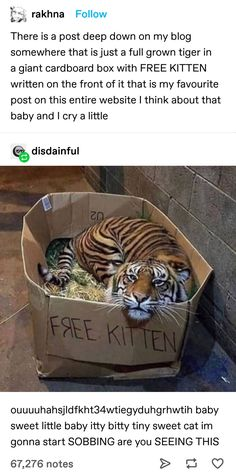 Funny Animal Pictures, Cute Funny Animals, Cute Baby Animals, Funny Cute, Animals And Pets, Cute Cats, Hilarious, Crazy Cat Lady, Crazy Cats