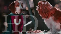 A lab accident gives a hound named Shoeshine some serious superpowers -- a secret that the dog eventually shares with the young boy who becomes his owner and friend. Walt Disney Pictures, Free Advertising, Young Boys, Boys Who, Super Powers, Movies To Watch, Lab