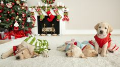 What's on your pet's wishlist? #MarthaStewartPets