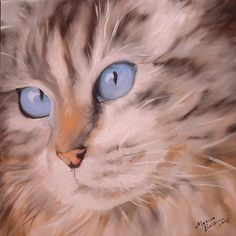 Portrait of cat. Marcia Baldwin