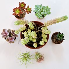 These are succulents.