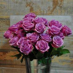 Trandafiri Violeți cu livrare în Moldova Rose, Plants, Pink, Roses, Planters, Plant, Planting, Pink Roses
