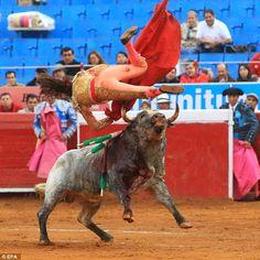 Torera mexicana es corneada dos veces por el mismo toro al que quería asesinar (video) | Seamos Más Animales... Como Ellos