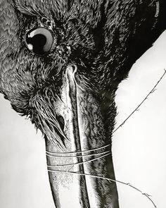 "@aaronhorkey on Instagram: ""To the Night (detail), ink & gouache on paper, 2009.  #aaronhorkey #thevacvvm #chiriachosummit #corvidae"""