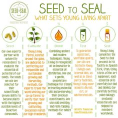 Pure, therapeutic grade essential oils, such as those from Young Living, are extremely beneficial allies in our natural health journey. Essential oils are Essential Oils 101, Essential Oil Blends, Young Living Oils, Young Living Essential Oils, Young Living Products, Baby Products, Young Living Baby, Rum, Young Living Business