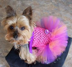 Dog TuTu Dress for toy breeds in Sunset colors Hair by Frillypaws