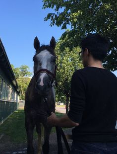 2016. Belmont contender,  #LANI.