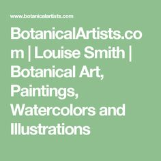 BotanicalArtists.com | Louise Smith | Botanical Art, Paintings, Watercolors and Illustrations