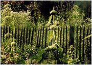 Bauerngartenzaun, Gartenzaun, Grenzzaun, Lärche