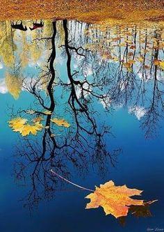 Floresta...