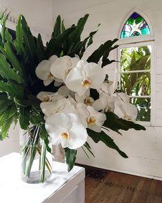 Altar florals. 🌟🌟🌟🌟🌟. \\ \\ #stmarybythesea #portdouglas #altar #white #phalaenopsis #orchids #foliages #nineblooms #portdouglaswedding #portdouglasweddingflowers #happilyeverbrysons White Floral Arrangements, Floral Arch, Wedding Arrangements, Flower Arrangements, Phalaenopsis Orchid, Orchids, Orchid Wallpaper, Floral Wedding, Wedding Flowers
