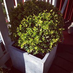 Puksipuu Outdoors, City, Green, Plants, Cities, Plant, Outdoor Rooms, Off Grid, Outdoor