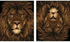 Lion or Squirrel?