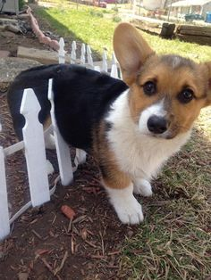 He Got Stuck ♡... re-pin by StoneArtUSA.com ~ custom pet memorials.  See more DOGS and FENCES  http://www.pinterest.com/stoneartusa/~-dogs-fences-~/
