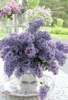 A lilac bouquet / Aiken House & Gardens Lilac Flowers, Fresh Flowers, Spring Flowers, Beautiful Flowers, Lilac Bouquet, Purple Lilac, Purple Roses, Flowers Nature, Beautiful Flower Arrangements