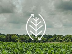 organic agriculture icon