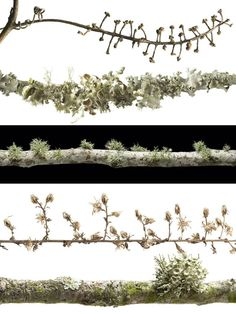 Lichen; jewellery inspiration.