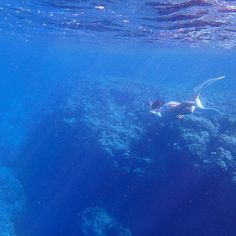【sechastagram】さんのInstagramをピンしています。 《🏝✨🏝✨🏝 おやすみって感じでー💤 good night😴 잘자요💤  #宮古島 #海 #スノーケリング  #沖縄  #離島 #伊良部島 #스킨다이빙 #셀스타그램 #셀카  #얼스타그램 #바다스타그램 #바다  #오키나와 #미야코섬 #스노클링  #instagood #instalike #instacool  #instalove #miyako #sea #coralreef #underwaterworld #skindiving  #ocean #water #blue #underwater #mermaid #sun》