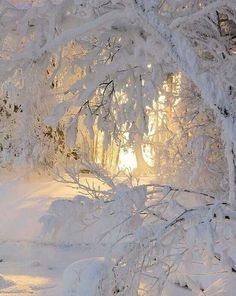 Beautiful! (makes me think of Narnia)