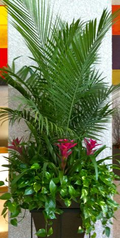 What To Search For Right Before You Purchase Your Higher Than Floor Pool Palms And Bromeliads In Planted Raised Basket Tropical Landscaping, Tropical Plants, Backyard Landscaping, Tropical Flowers, Palm Plants, Tropical Gardens, Exotic Plants, Exotic Flowers, Green Plants