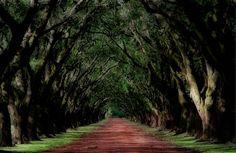 Sustantivo: Robles- Árbol de la familia de las fagáceas,de gran tamaño,hojas perennes,flores unisexuales y fruto amargo,llamado bellota,cuya madera es muy apreciada en carpintería por ser dura y compacta