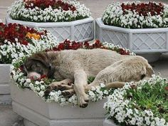 PetsLady's Pick: Funny Dog Flower Bed Of The Day  ... see more at PetsLady.com ... The FUN site for Animal Lovers