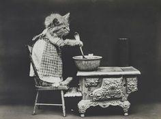 Gato cocinando