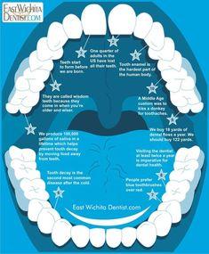 Some dental facts. Some dental facts. Some dental facts. Teeth Implants, Dental Implants, Dental Hygienist, Dental Assistant, Dental Surgeon, Surgeon Humor, Las Vegas, Emergency Dentist, Dental Facts