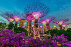 SINGAPORE – Supertree Grove, Gardens by the Bay. This Garden is located across from the Marina Bay Sands hotel, which can be seen in the background. The top portion of the hotel is shaped like a ship. Holiday In Singapore, Visit Singapore, Singapore Travel, Singapore Holidays, Singapore Attractions, Singapore Garden, Sands Hotel, Padang, Gardens By The Bay